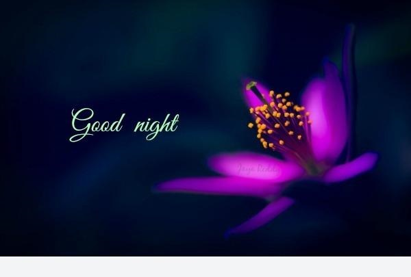 images for good night wishes